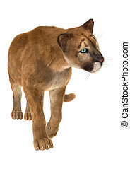 Puma - 3D digital render of a big cat puma walking isolated...