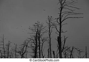 Silhoute Of Cormorants In Dead Trees Spooky Scene