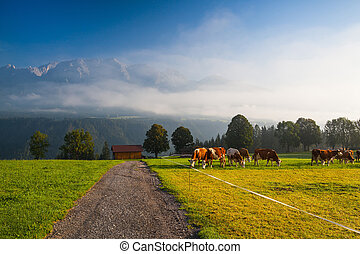 On pasture in the morning mist - On a farm in the high...