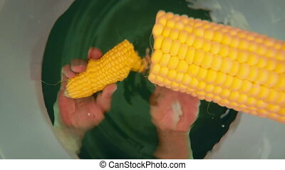 Boiling fresh corn on the cob