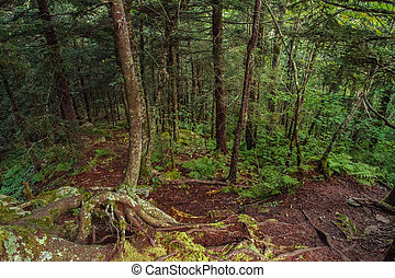 Appalachian Trail - View from the Appalachian Trail in the...