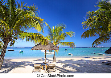 Mauritius palm beach - Sand beach, palms, lounge chairs with...