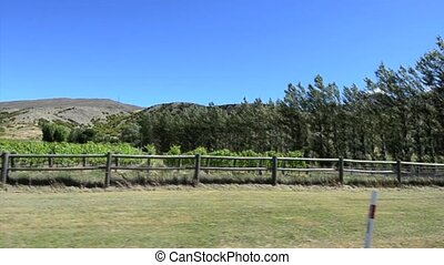 Queenstown NZ 17 - Landscape of vineyards in Gibbston Valley...