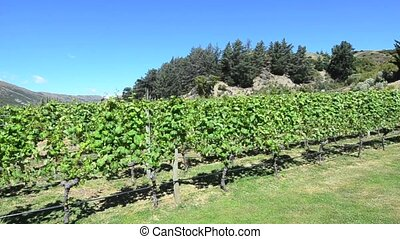 Queenstown NZ 18 - Landscape of vineyards in Gibbston Valley...