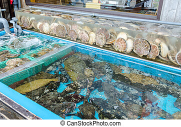 Fresh scallops in the market