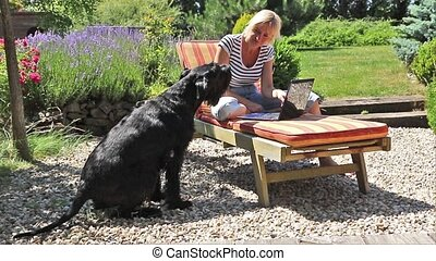 Barking Giant Black Schnauzer - Giant black schnauzer is...