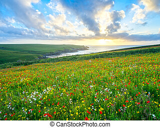 Wild flowers at Porth Joke Cornwall - Sunset over a Field of...
