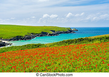 Wild flowers at Porth Joke Cornwall - Field of Poppies and...