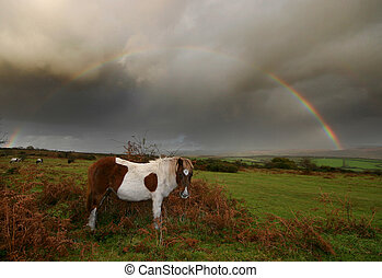 Pony under a Rainbow Dartmoor Devon - A Dartmoor pony...