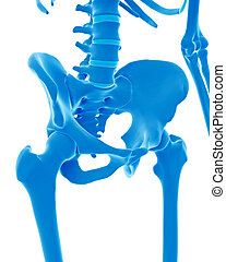 the skeletal pelvis - medically accurate illustration of the...
