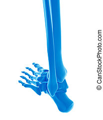 the skeletal foot - medically accurate illustration of the...