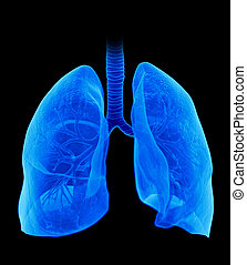 the lung - medically accurate illustration of the lung