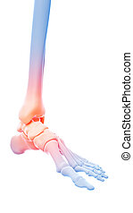 painful ankle - medical 3d illustration of a painful ankle