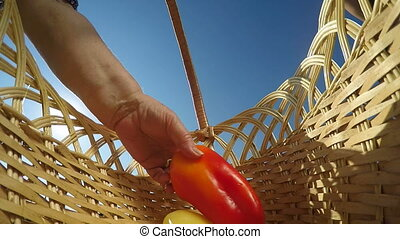 bell pepper in wicker basket - Hand of senior woman placing...