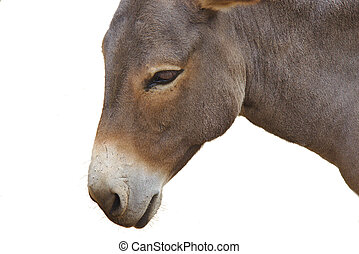 Close up of donkey head isolated on a white background -...