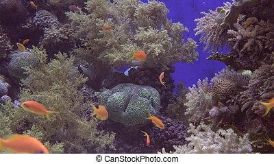 Tropical fish swim in Eilat, Israel - Tropical fish swim in...
