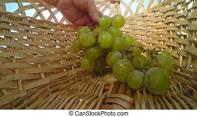 white and black grapes in basket - Hand of senior woman...