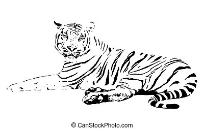 Tiger - vector illustration of the white tiger on a white...