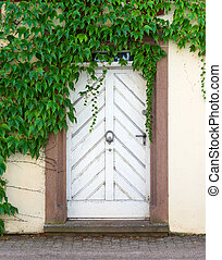 White door with virginia creeper - An old, white, dirty door...