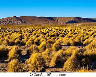 Mountain landscape of Cordillera de Lipez in Bolivia -...