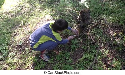 A boy collects mushrooms