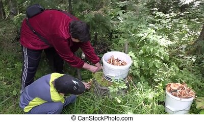 Grandmother and grandson gather mushrooms in the forest