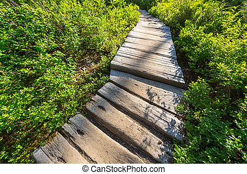 Boardwalk in forest - boardwalk in forest