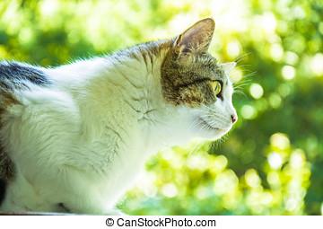 momento, gatto