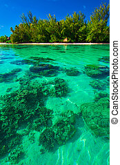Underwater coral reef next to green tropical island on Moorea