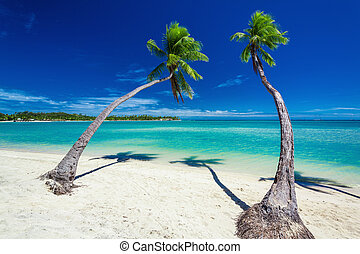 Palm trees hanging over green lagoon with blue sky in Fiji