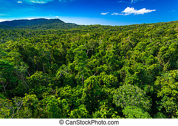 Rain forest from air near Kuranda, Queensland, Australia
