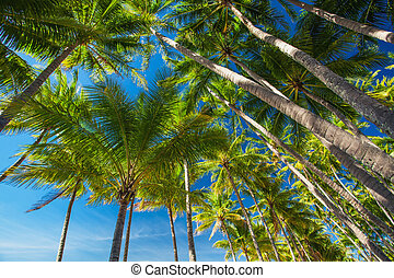 Palm tree forest against the blue sky