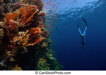 Freediver in the sea - Freediver descending along the vivid...