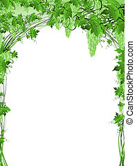 green grape vine frame - Illustration of green grape vine...