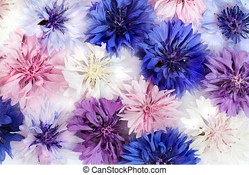 Cornflowers - Field and Meadow Flowers Cornflowers different...