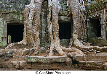 Ancient tree and ruins entwined - Bayon tree growing on...