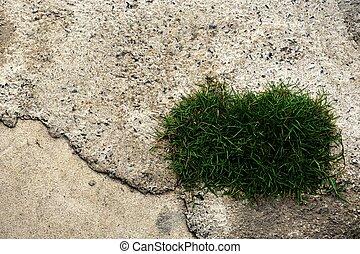 grass on concrete floor