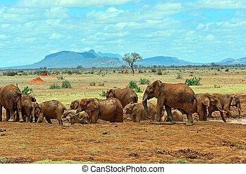 Elephants Tsavo East
