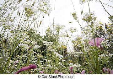 grassland - inside the grassland