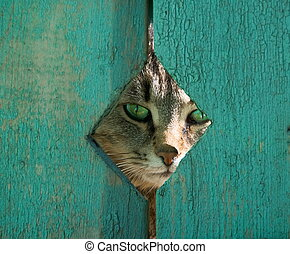 Green-eyed cat peeping between boards