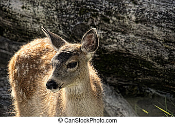 Wild Fawn with Spots - Wild spotted fawn alone in wilderness...