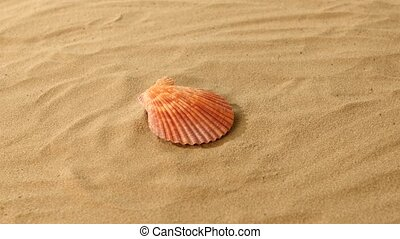 Sea shells, pink, on sand, rotation - Beautiful sea shells...