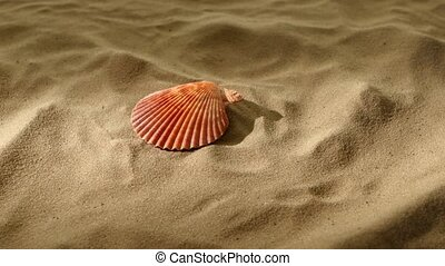 Sea shells, pink, on sand, shadow, rotation - Beautiful sea...