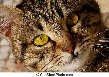 Close-up portrait of yellow-eyed cat in Turkey