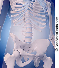 lumbar spine - medically accurate illustration - lumbar...
