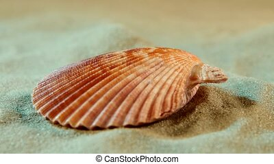 Ocean shell on sand, blue light, close up, rotation -...