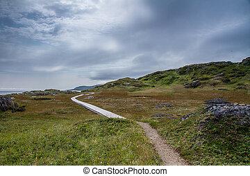 Saddle Island Landscape - Tundra Like landscape of Saddle...
