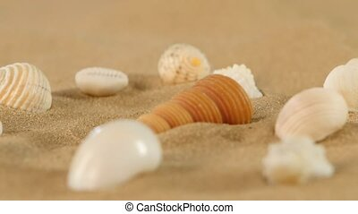 Different sea shells on beach sand, rotation, close up -...