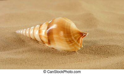 Long sea shell with sand, rotation, close up - Unusual long...