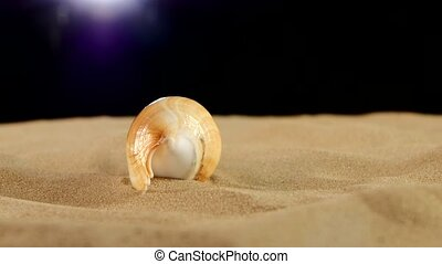 Long sea shell with sand on black, rotation, close up -...